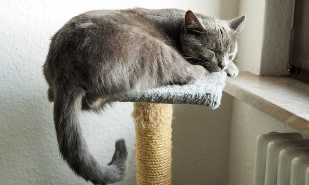 Best Cat Tree for Large Cats for 2018 – Complete Reviews and Comparison