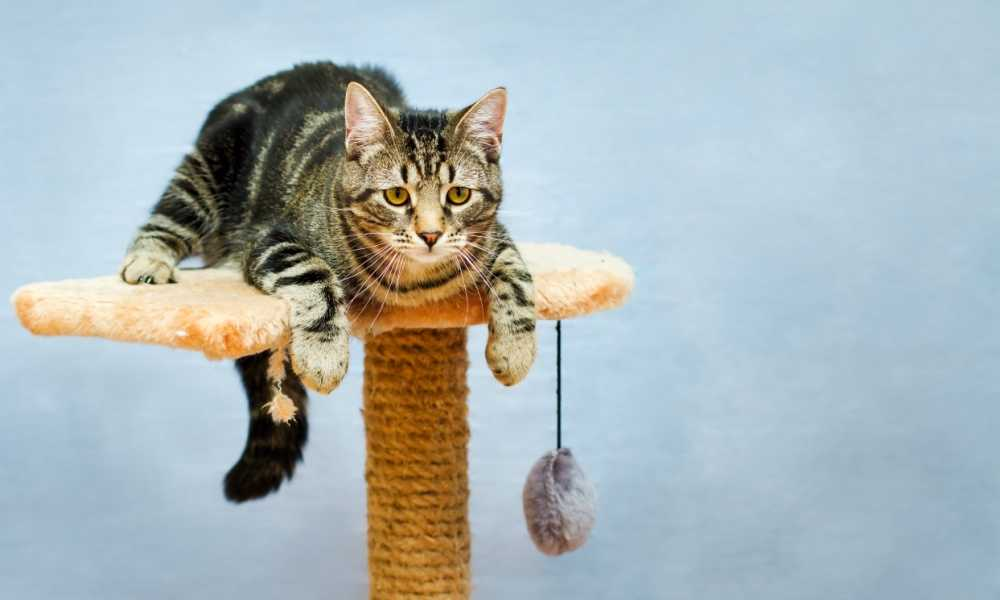 Best Cat Tree of 2018 – Complete Reviews with Comparison