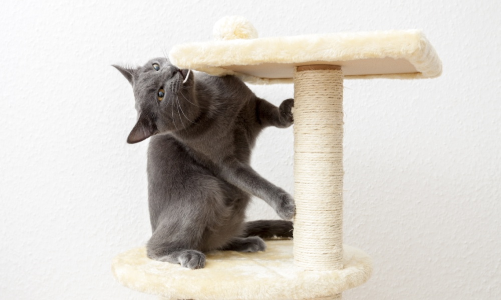 Cat Tree Articles